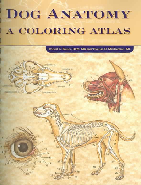 Dog Anatomy By Kainer, Robert/ Mccraken, Thomas O.